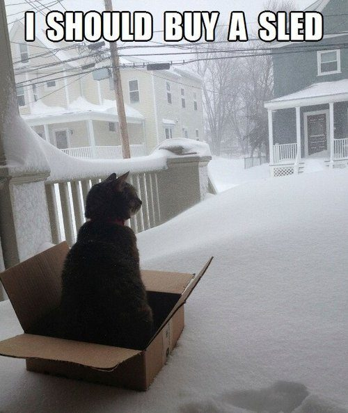 "Cat says, ""I should buy a sled."""