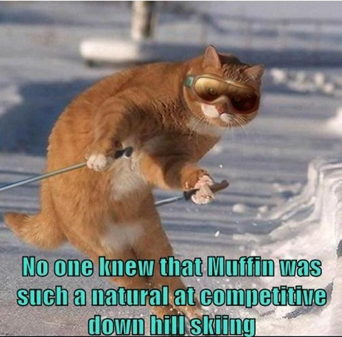 No one knew Muffin was such a natural at competitive downhill skiing.