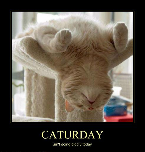 Not doing diddly on a Caturday is what Caturday is meant for!