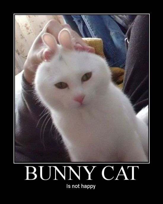 Bunny cat is not amused.