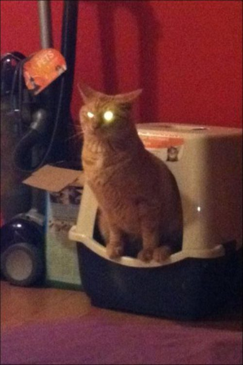 If your cat's eyes glow after using the litter box, it's time to change it!