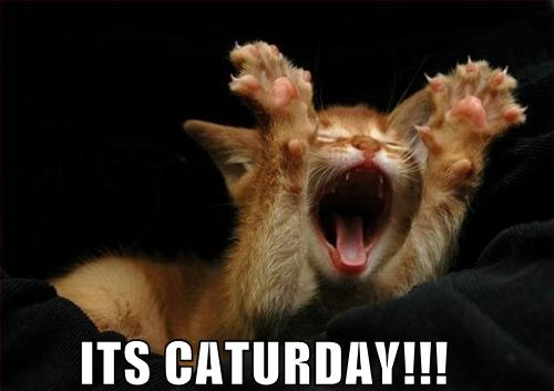 Corroboration has been received, it is Caturday!  Tell your friends, tell your family, tell your friend's family that it is indeed, Caturday!
