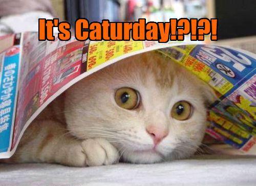 It's caturday?
