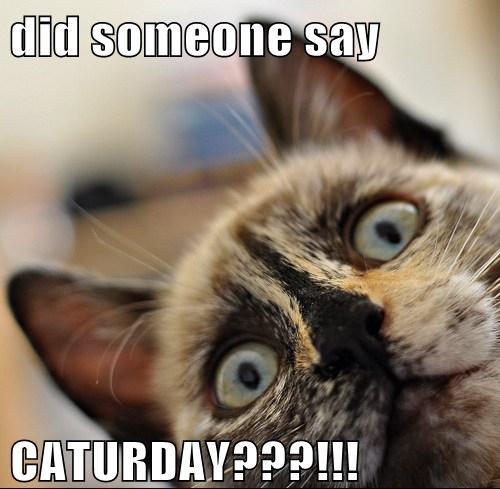 Did someone say caturday?
