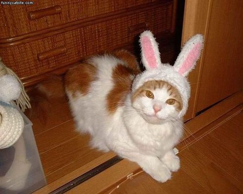Cat with rabbit ears.  Happy Easter!