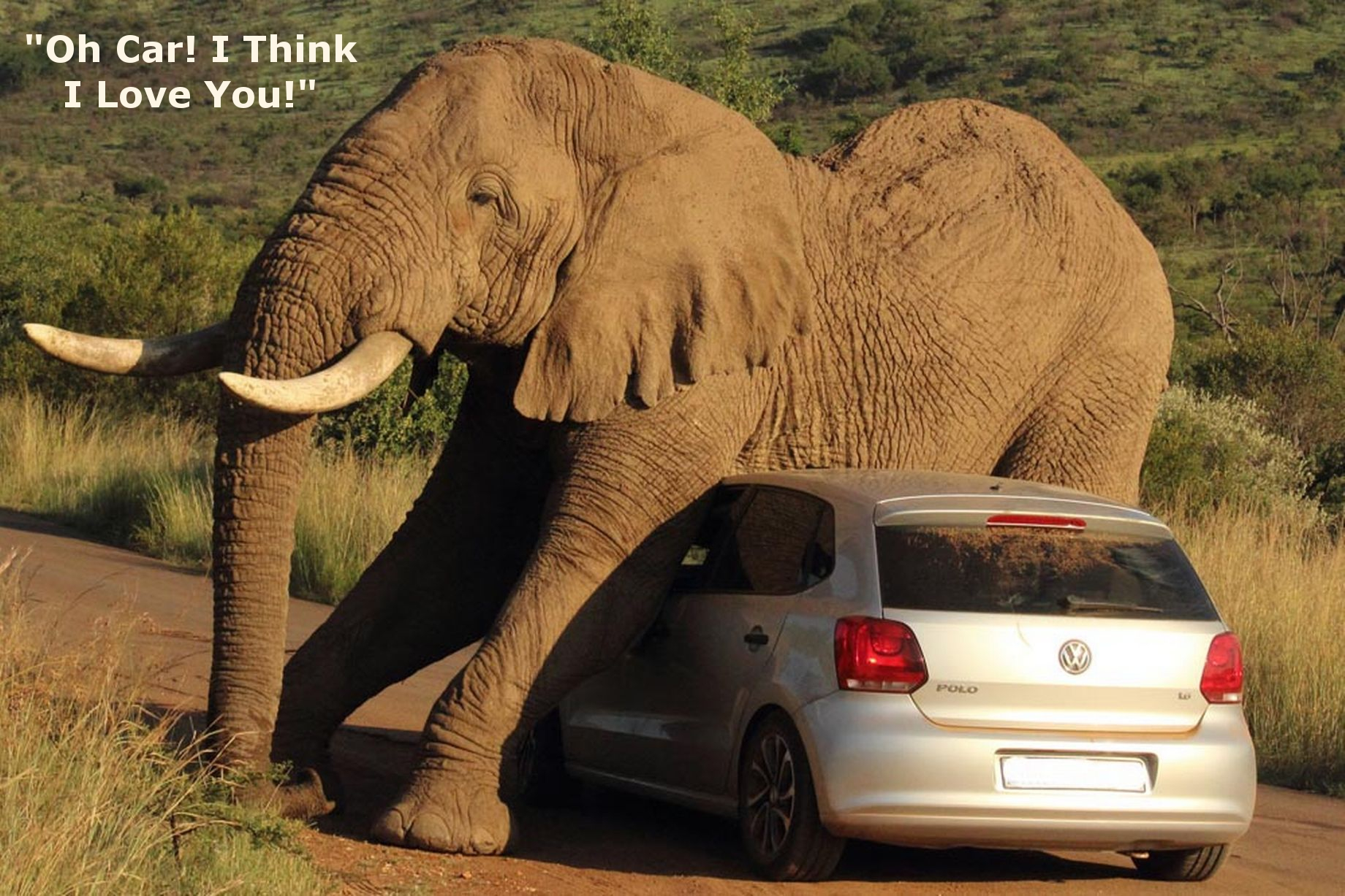 You think your day was tough?  Ever had an elephant take a liking to your car, a philandering pachyderm, if you will?  Yeah, neither have we.