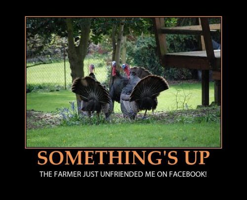 The turkey suspects something is afoot ...