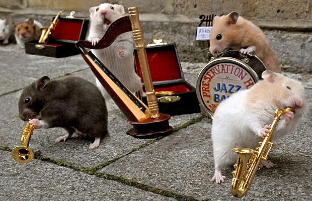 Finishing up their New Year's eve, whirlwind tour, the All Hamster Jazz Band.