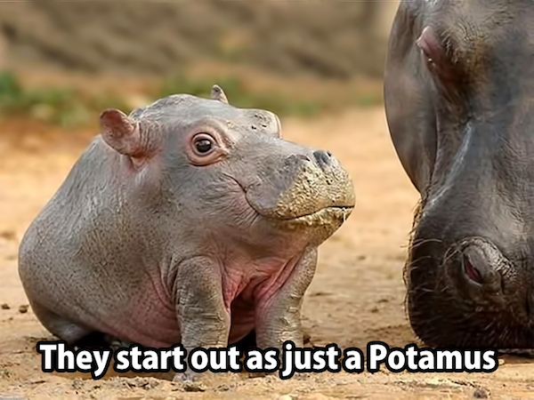 They start out as just a potamus ... don't we all.