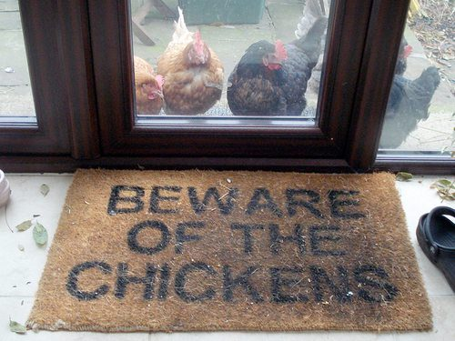 Beware of the chickens ... BEWARE!