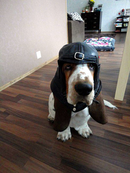 Rad Basset: Ready to Roll, Fly or Rumble