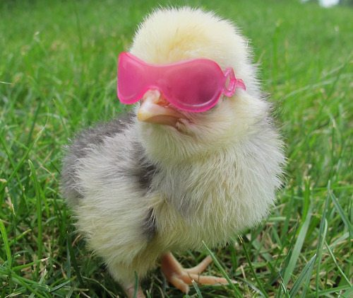 One Cool Chick